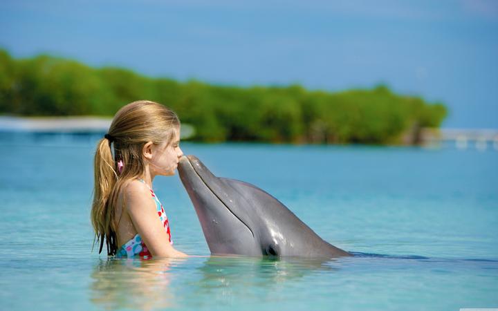 дельфины Канкун