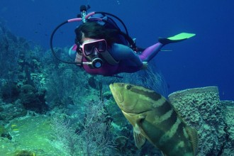 diving riviera maya tour