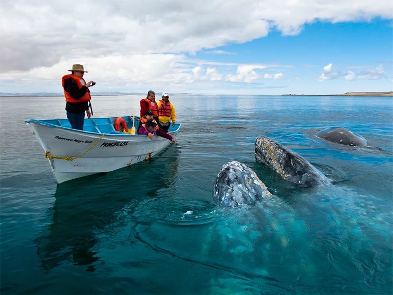 whales watching mexico tours