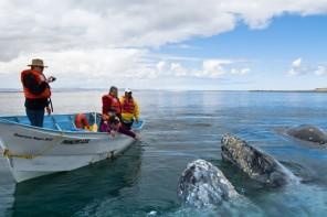 киты ла пас лос кабос
