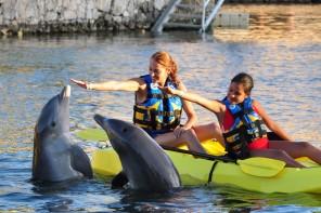 Dolphins tour cancun