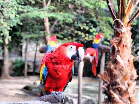 попугаи шкарет мексика