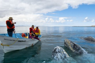 gray whales watching tour mexico